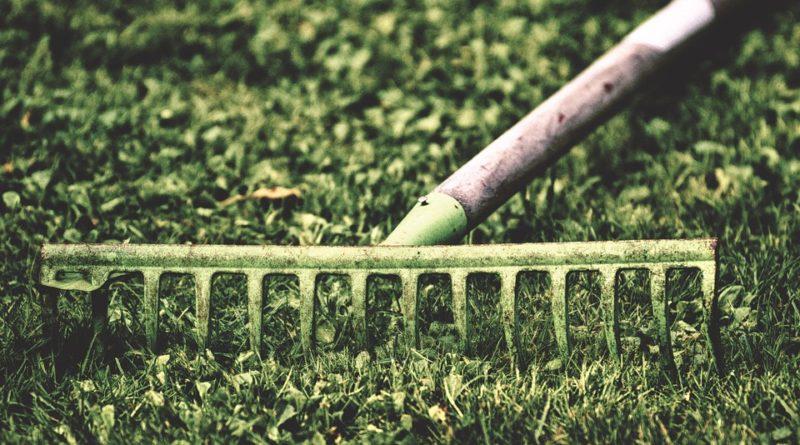 Hnojíme rostliny dřevěným popelem a vodou