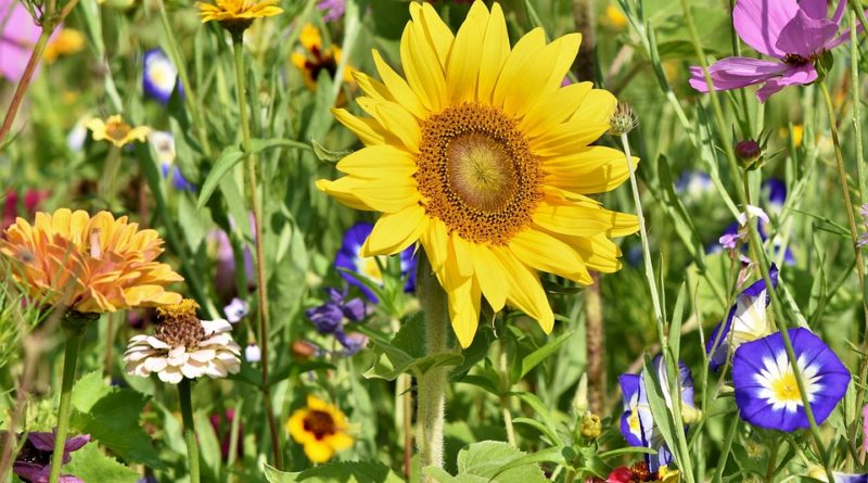 Jaké květiny se vyjímají ve venkovských zahradách?