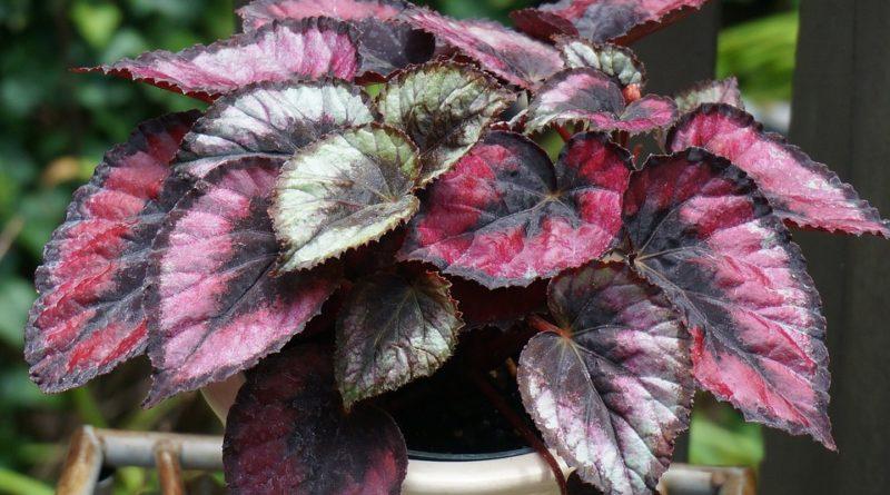 Vyplňte vaši domácnost rostlinami, které okouzlí díky svým listům